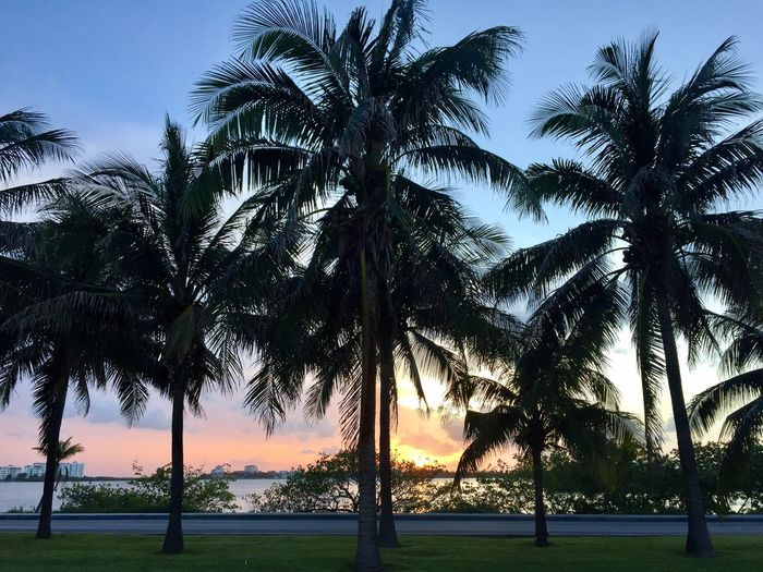 Palm Tree Tree Beauty In Nature Nature Scenics Tranquility Water Tranquil Scene Outdoors Sky Day Sunset Mexico Cancun Lagoon