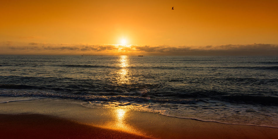 eauty in nature Beach Beauty In Nature Bird Horizon Over Water Idyllic Landscape Nature No People Orange Color Outdoors Reflection Sand Scenics Sea Sky Summer Sun Sunlight Sunset Tranquil Scene Tranquility Travel Destinations Vacations Water Wave