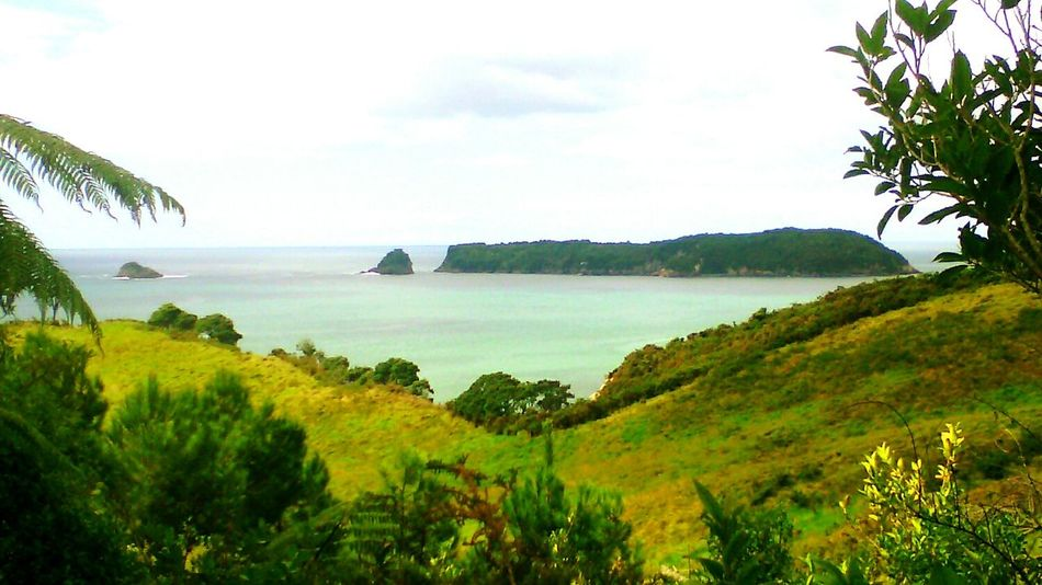 On our wall to Cathedral Cove