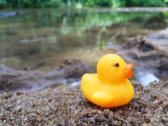 My Rubber Duck