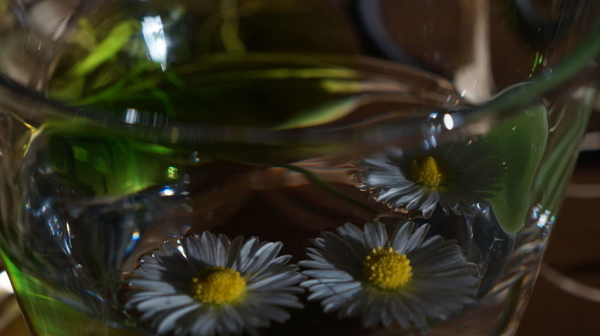 Close-up Cup Daisy Flower Flower Head Focus On Foreground Fragility Freshness Glass - Material Green Green Color Growth Indoors  Natural Lighting Petal Plant Raffia Reflection Shiny Transparent Underexposed Water White Color Yellow