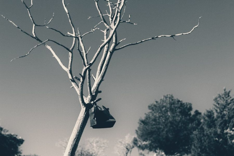 Tree Branch Low Angle View Day Outdoors Nature No People Bare Tree Sky Animal Themes Beauty In Nature Darkness And Light Dark Photography Black & White By Tisa Clark Shadows & Lights Dark🌌 By Tisa Clark Blackandwhite Graveyard Cemetery Wrought Iron
