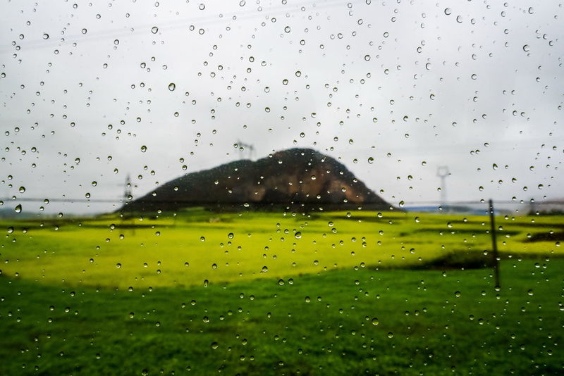rapeseed flower field with dew drop on glass Rain Rapeseed Field Animal Themes Architecture Beauty In Nature Canola Canola Field Clear Sky Close-up Day Dew Drops Drop Freshness Glass Grass Green Color Nature No People Outdoors Rain RainDrop Rapeseed Rapeseed Flowers Sky Tree Water Weather Wet Window