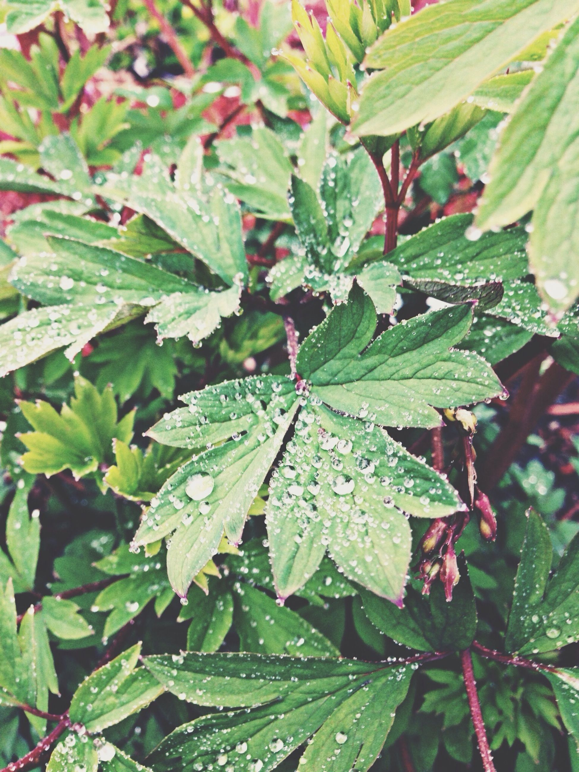 leaf, growth, green color, close-up, nature, leaf vein, plant, leaves, freshness, beauty in nature, focus on foreground, branch, full frame, day, tranquility, outdoors, no people, drop, backgrounds, wet