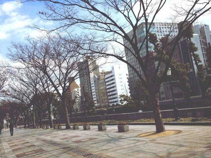 冬枯れ… Desolate Scene City Skyscraper Winter Trees the end of January Nakanoshima Street 1月も終わり、、ます。