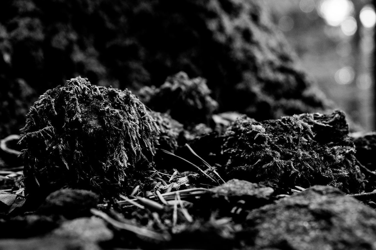 selective focus, close-up, nature, no people, day, plant, moss, outdoors, focus on foreground, rock - object, rock, land, beauty in nature, plant part, tree, leaf, textured, growth, solid, food, lichen