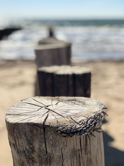 Lazy Day Perfect Weather Perfect Day At The Beach Perfect Day Wood - Material Focus On Foreground Land Water Sea Nature Beach Tree Stump Sunlight
