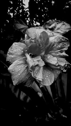 Droplets... Flora