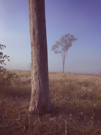 Landscape Tree Tree Trunk Tranquility Nature No People Tranquil Scene Beauty In Nature Day Grass Lone Sky Outdoors Scenics Bare Tree Clear Sky The Great Outdoors - 2017 EyeEm Awards