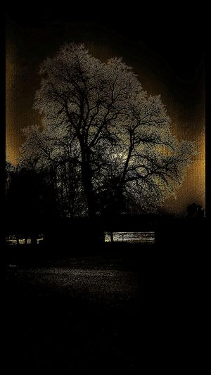 Tree EyeEm Best Shots Lights And Shadows ArtWork Water Best Of EyeEm Street Photography Gripsholm Beauty In Nature Nature Black Background Silhouette