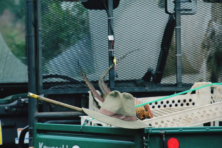 Dead Pheasant By Hat In Pick-Up Truck