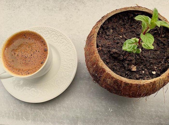 Coffee Türkkahvesi IPhoneography Iphone6s NoEditNoFilter Nature 🍃☘🍀☕️