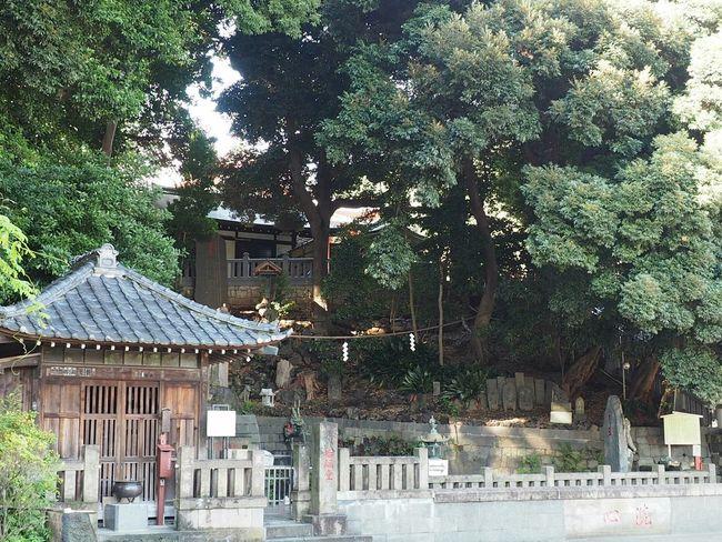 Japanese Temple Japan Japan Photography Taking Photos Relaxing Streetphotography Japanese  初めて来たけど、大きくて立派なお寺だった。あの大きさはカメラじゃ伝わらないかな(笑)。