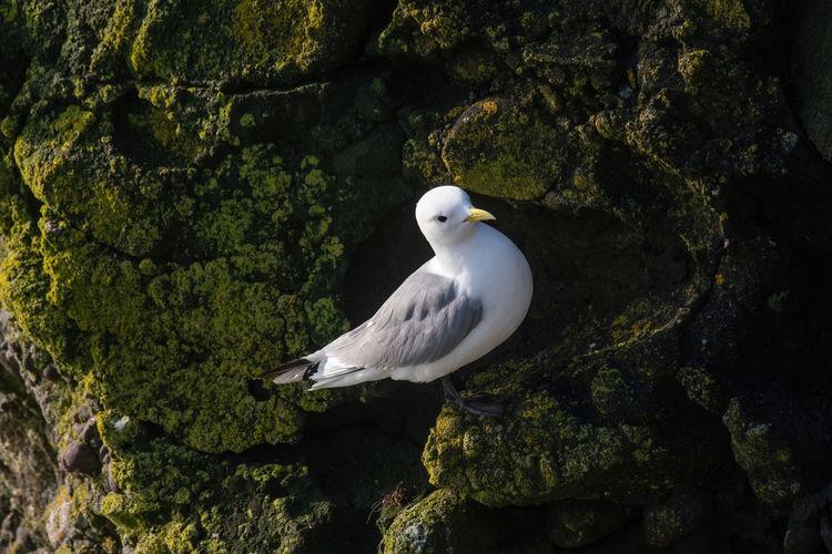 White bird perching on rock