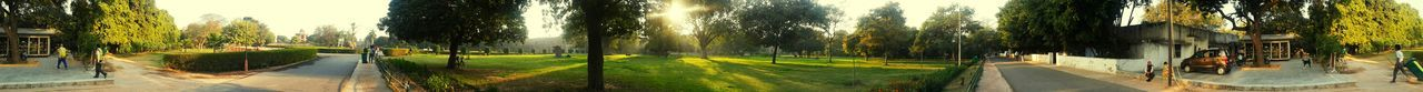 Panoramic Tree Growth Nature Water Day No People Outdoors Beauty In Nature Sky