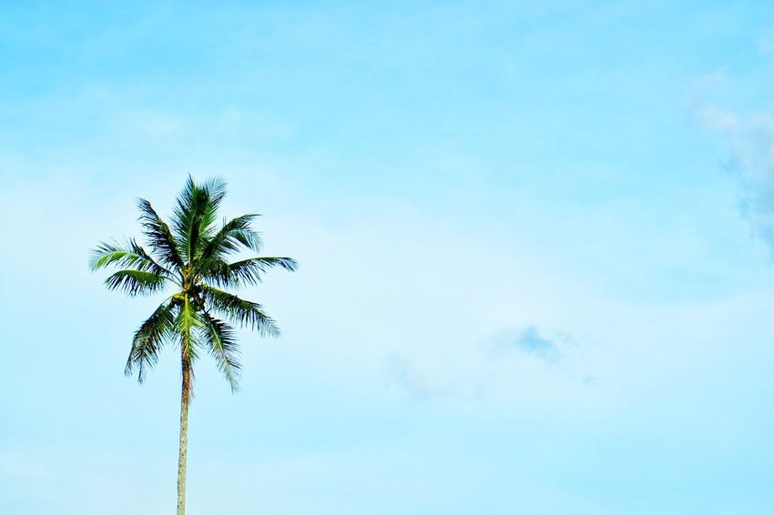 The Great Outdoors - 2017 EyeEm Awards BYOPaper! EyeEmNewHere Outdoors Philippines EyeEm Best Shots Eyeemphotography Snapseededit Myownphotography Mobile Conversations Snapseed Trees Leaves Leaf Sky Lovely Weather