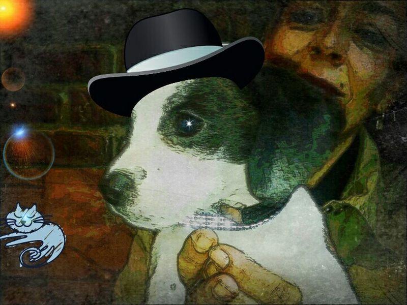 Dogstagram Dogs