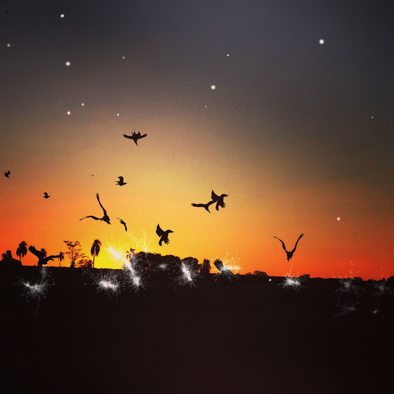 flying, animals in the wild, animal themes, bird, silhouette, large group of animals, sunset, nature, flock of birds, animal wildlife, beauty in nature, migrating, mid-air, sky, outdoors, no people, togetherness, spread wings, tree, flamingo, day