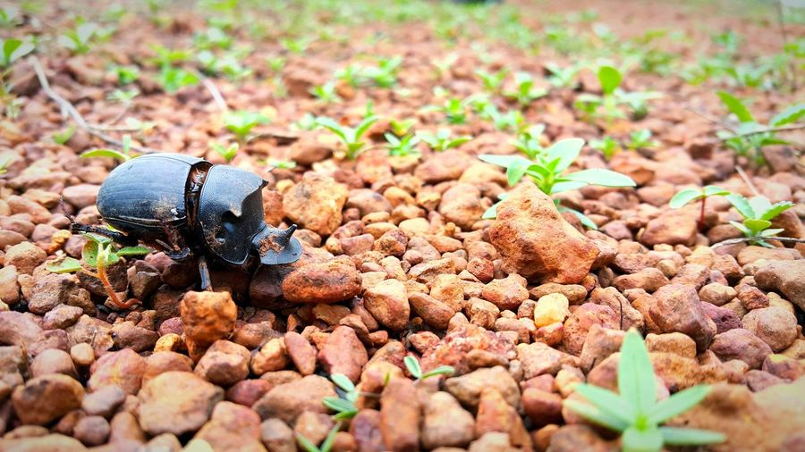 Insect On Stone Covered Field