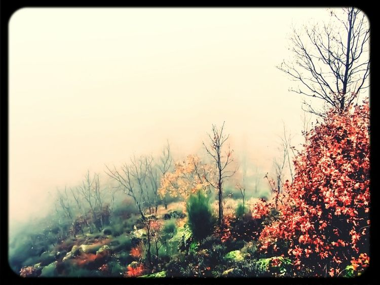 Paseos entre la niebla. Relaxing Nature Landscape Trees Taking Photos Painting Forest Eye4photography