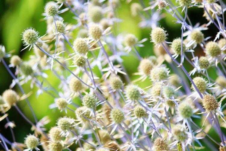 Blossom Petal