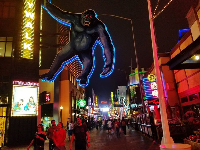 Night Illuminated Animal Representation Multi Colored City Celebration Arts Culture And Entertainment People Architecture Outdoors Neon