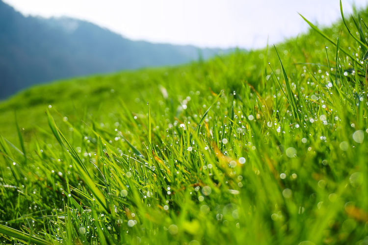 Close-up of grass on grassy field