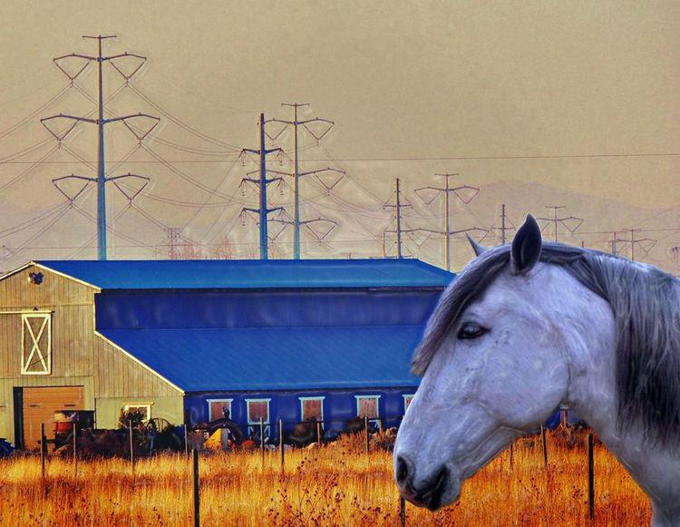 Agrarian Barn Barns Edit Energy Grass Horse Horses Plastic Sparkles