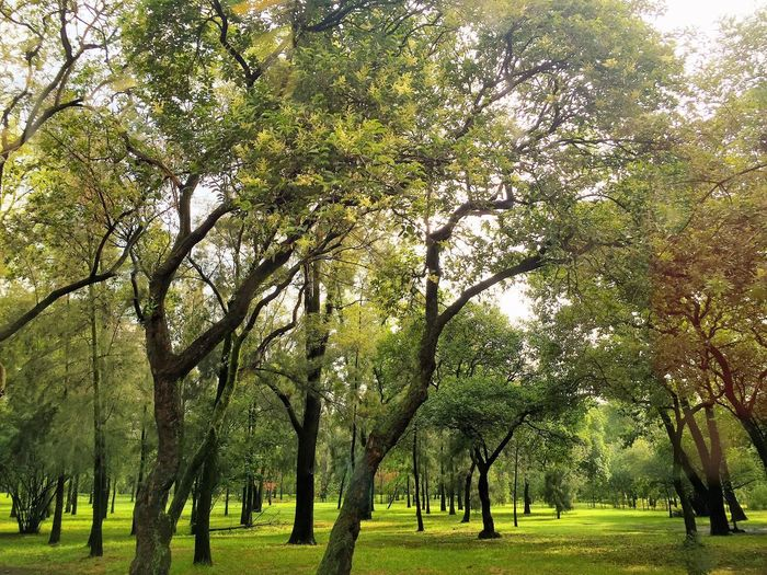 Bosque Bosque De Chapultepec México Arboles , Naturaleza First Eyeem Photo