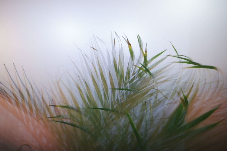Close-Up Of Blade Of Grass Against Sky