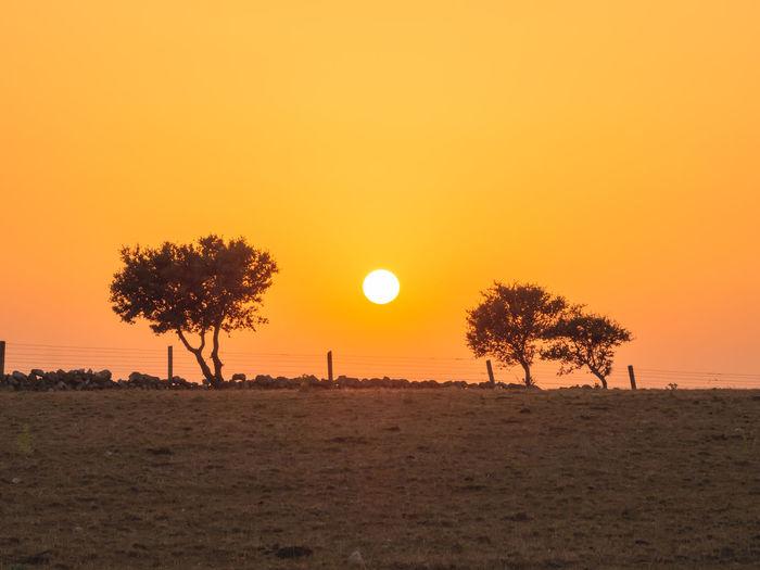 Silhouette trees on field against orange sky