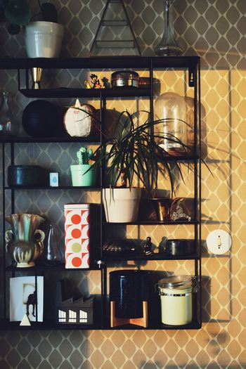 Wall Shelf Light And Shadow Indoors  No People Arrangement Container Pattern Choice Nature Large Group Of Objects Variation Wall - Building Feature Still Life Day Plant Shelf Potted Plant 17.62°