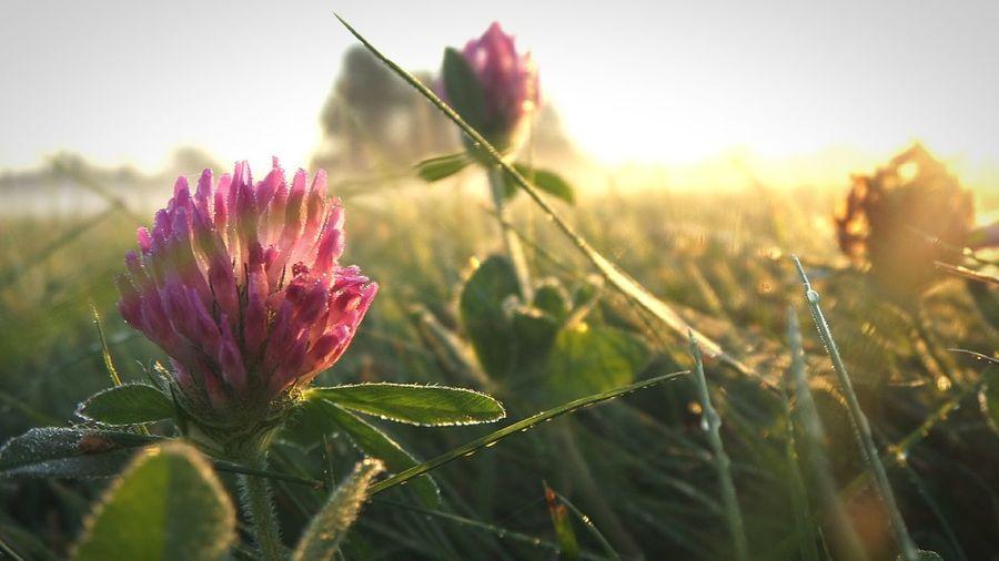 Nature Flower