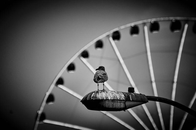 Bird behind the