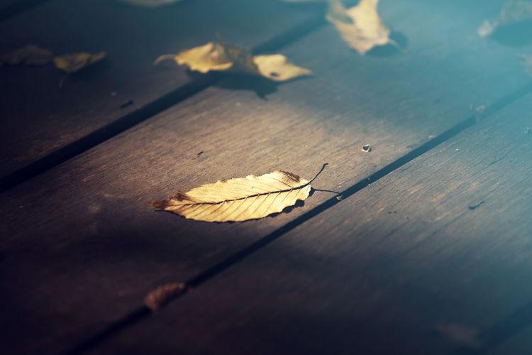 Autumn Wooden