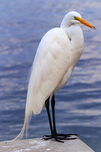 Animal Themes Animal Wildlife Animals In The Wild Beauty In Nature Bird Close-up Day Lake Nature No People One Animal Outdoors Perching Water White Color