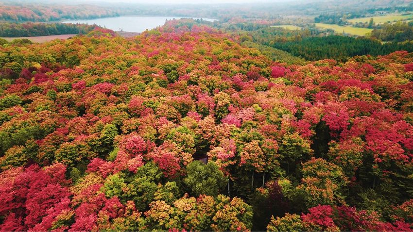 The season of love, the season of colours, the season of Fall. Fall Colours Trees Fall Colors Fall Beauty Fall Tree Dronestagram Drones Aerial Landscape Aerial Photography Aerial Shot Aerial Aerial View Djiglobal DJI X Eyeem DJI Mavic Pro Dji Dronephotography Drone  Beauty In Nature Plant Growth Tranquility Scenics - Nature Nature Land Tree High Angle View Landscape Environment