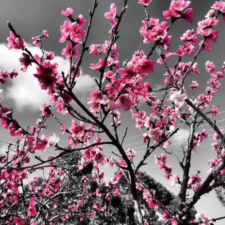 Pretty in pink Pink Color Branch Tree Plant Flower Flowering Plant Growth Beauty In Nature Nature Fragility Freshness Outdoors Blossom The Great Outdoors - 2018 EyeEm Awards