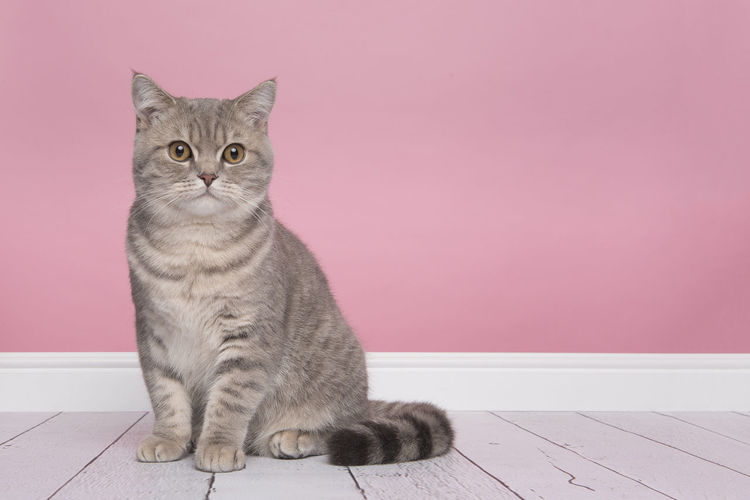 Portrait of cat sitting on pink indoors