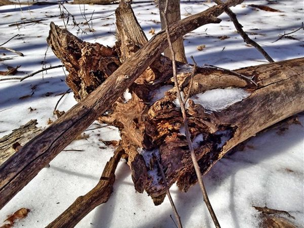 Bare Tree Branch Cold Cold Temperature Covered Covering Day Frost Frozen High Angle View High Definition Ice Nature Season  Snow Tranquility Tree Trunk Weather White Color Winter Wood - Material Rotten Log fallen trees