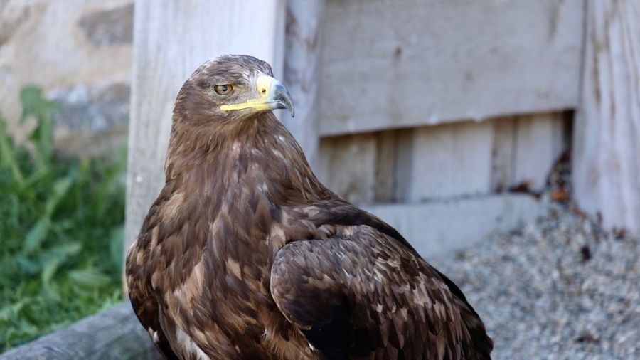 Close-up of eagle against wall