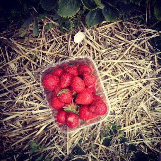 Strawberry Frinton