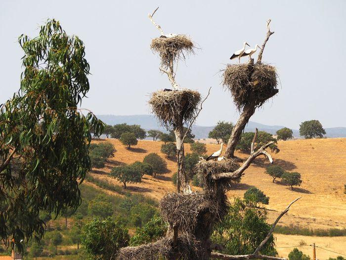 Storks are leaving Nature Nature Photography Landscape Stork Nest Stork Bird Field Countryside Tree Sky Plant
