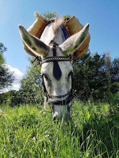 Growth Nature Plant Sky Field No People Outdoors Day Beauty In Nature Tree Grass Clear Sky Freshness Close-up Pet Portraits Domestic Animals Donkey Animal Themes On The Road Take A Rest Eating Hiking With Donkey Beautiful Day
