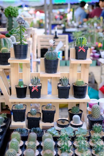 Cactus market Cactuslover Cactus Collection Cactus Garden Cactus Flower Cactus For Sale Variation Choice Potted Plant In A Row Retail  Day Focus On Foreground Large Group Of Objects No People Market Plant Hanging Indoors  Multi Colored Close-up