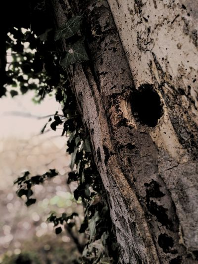 Outdoors No People Non-urban Scene Wood Nest Nesting Place Hole Hole In Tree Black And White Black & White Blackandwhite Tree Textured  Tree Trunk Full Frame Water Close-up Sky Bark Woodpecker Birdhouse