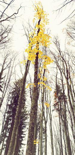 Der Herbst ist ein zweiter Frühling, wo jedes Blatt zur Blüte wird. Herbst Blätter Birke Wald Zauberhaft Traumhaft Bunt Gelb Yellow Baum Wandern Schön Beautiful Farbe Farbe Im Dunkel Herbstlich Blätter Tree Branch Backgrounds Full Frame Tree Trunk Sky First Eyeem Photo