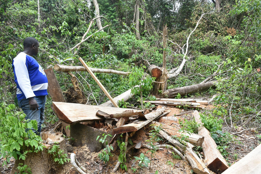 Deforestation of Mabira forest Axe Beauty In Nature Day Deforestation Effect Field Forest Growth Log Nature Outdoors Real People Timber Tree