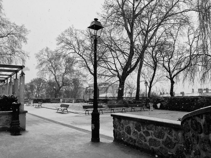 Parc Tree
