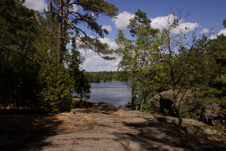 Lakeview National Park Sweden Swedish Nature Tree Tyresta Tyresta National Park Beauty In Nature Forest Lakeside Landscape Nature Naturreservat No People Outdoors Plant Rocks Scenics - Nature See Sky Tranquil Scene Tranquility Tree Trees And Sky Water